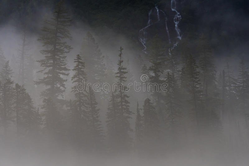 Pine Trees and Water Fall Peek Through Thick Fog. Pine Trees and Waterfall Peek through Thick Fog in the Montana mountains stock photography