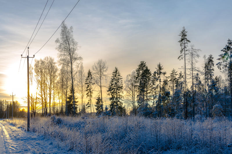 Pine trees in winter by a country road at sunset. Sunset on snow covered pine tree forest along a countryside road lined by telephone poles stock images