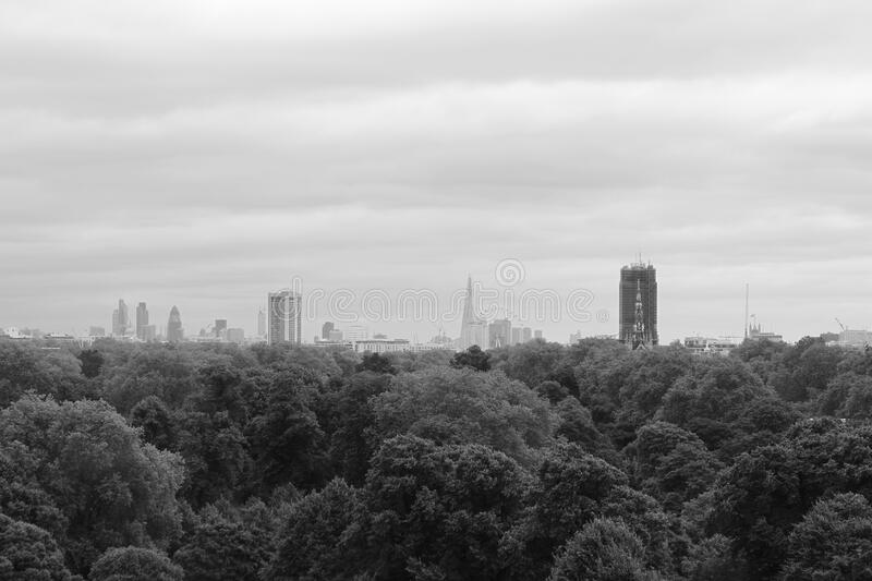 Download Pine Tress And High Building In Grayscale Photo Stock Image - Image of urban, photo: 83018837
