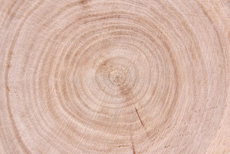 Pine trunk cut. Cross cut of a trunk of a pine stock photography