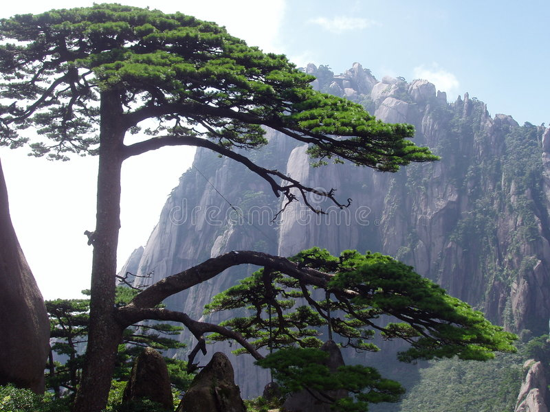 The pine of welcome visiters in Huangshan in China royalty free stock photos