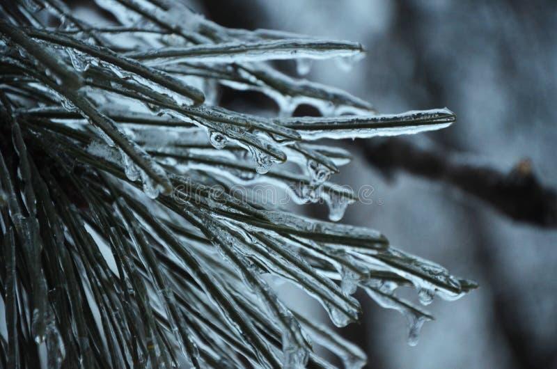 Pine winter ice needles background stock photos