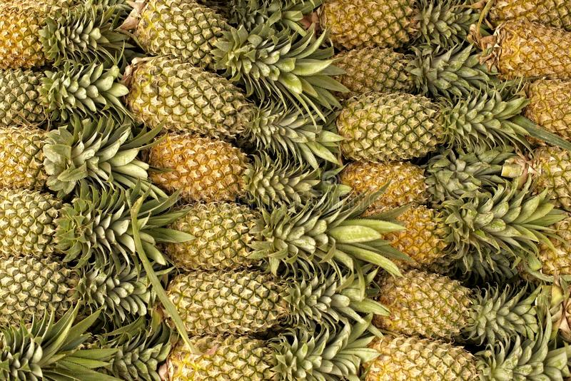Pineaples fotografia stock