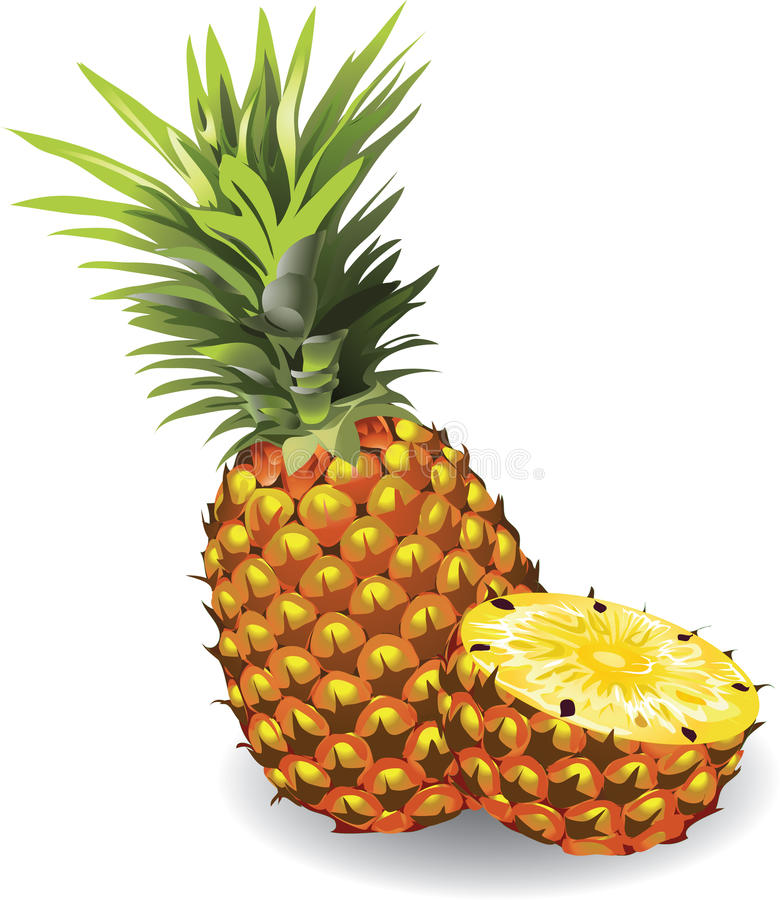 Pineapple. Whole and sliced. Vector illustration vector illustration