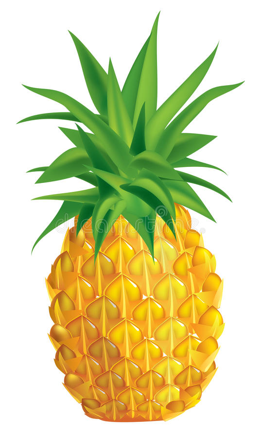 Free Pineapple Royalty Free Stock Photos - 12615798