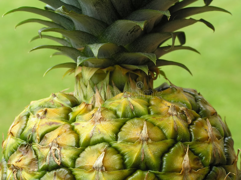 Download Pineapple stock photo. Image of fruit, food, vegetarian - 162892