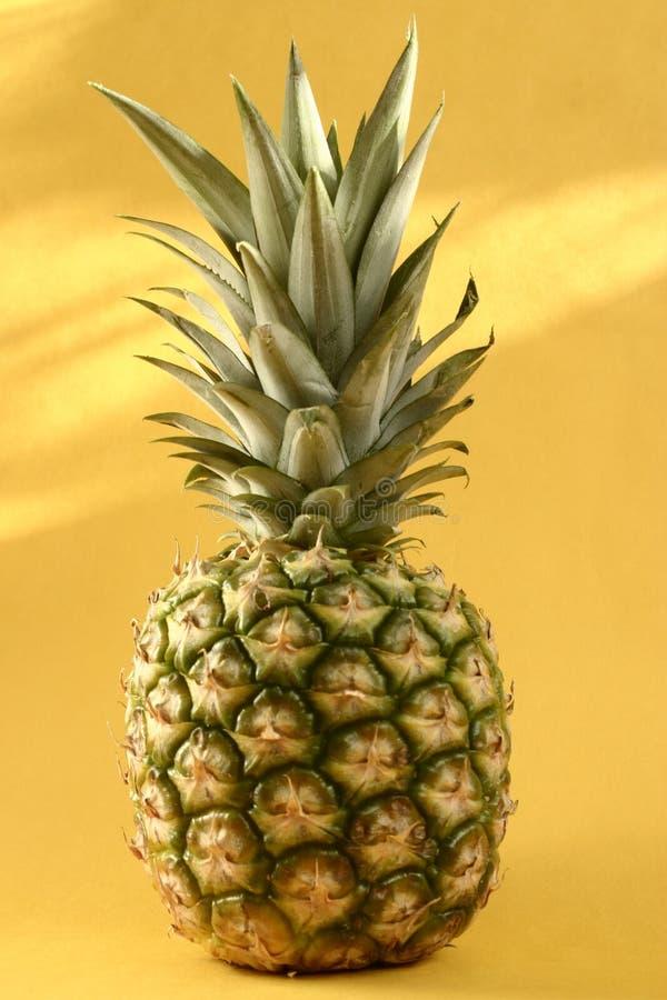 Download Pineapple stock image. Image of hawaii, tropical, yellow - 26266641