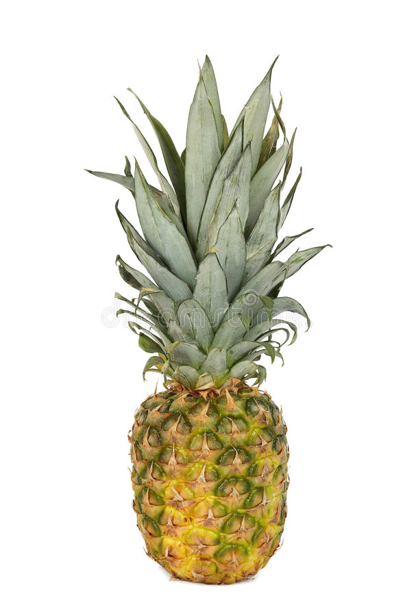 Download Pineapple stock image. Image of whole, dessert, fresh - 28528271