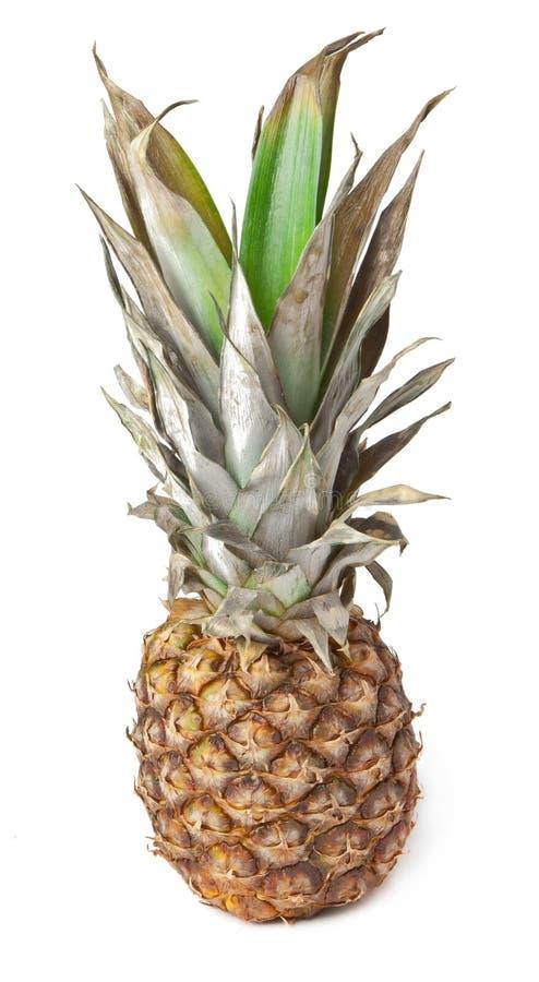 Pineapple Stock Photography