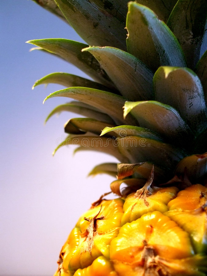 Free Pineapple Royalty Free Stock Images - 3570699