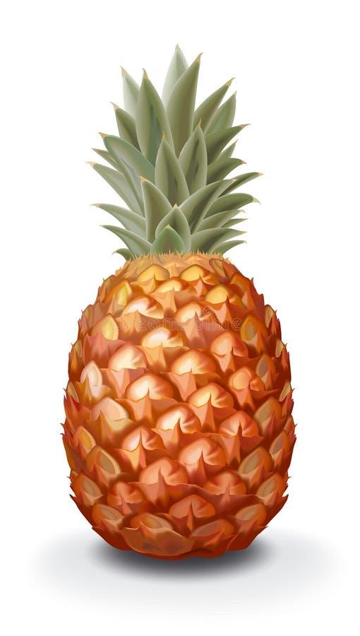Pineapple royalty free illustration