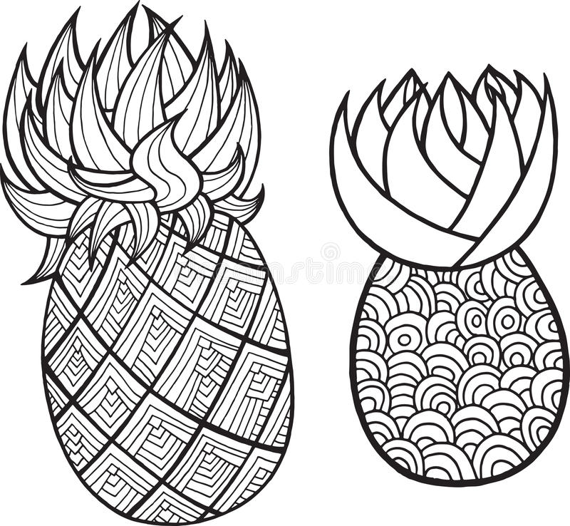 Pineapple and ananas coloring page. Graphic vector black and white art for coloring books for adults. Tropical and exotic fruit l royalty free illustration