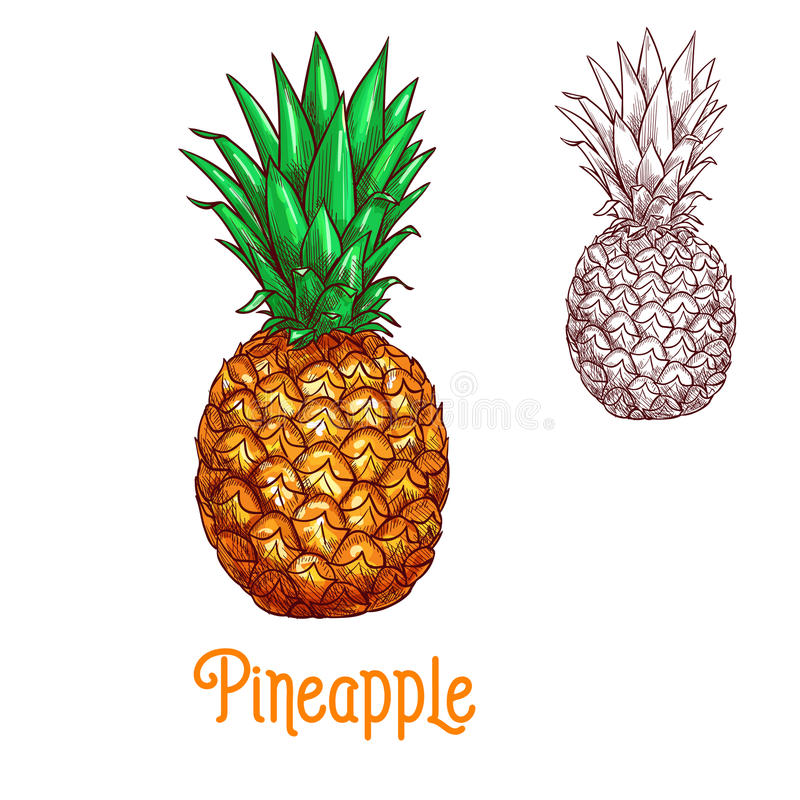 Pineapple ananas fruit vector sketch isolated icon royalty free illustration