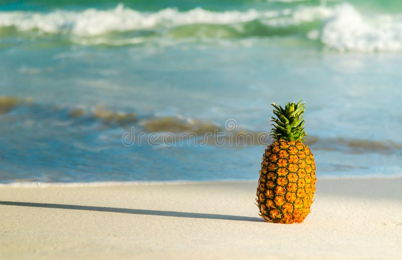 Pineapple on the beach. Whole pineapple on the beach with the sea in the background royalty free stock image
