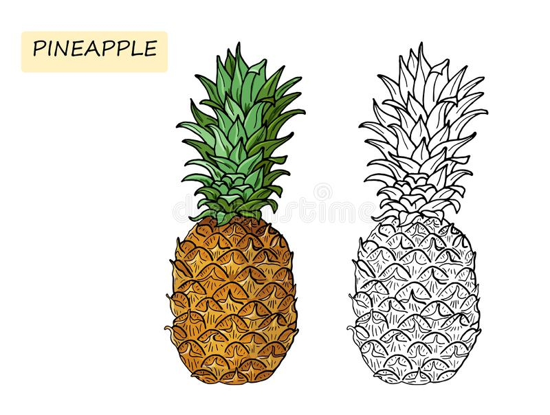 Pineapple.Coloring book for kids. Summer tropical food for healthy lifestyle.Whole fruit.Vector hand drawn illustration vector illustration