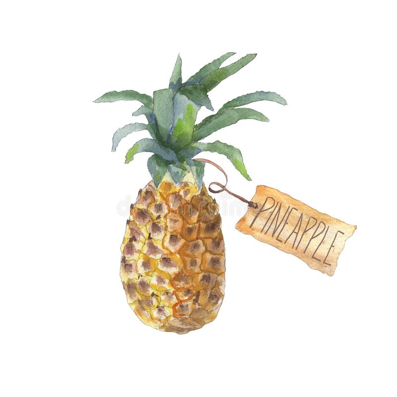 Pineapple with craft paper tag. Watercolor painting of pineapple with a brown craft paper tag. Tropical fruits greeting card design. Isolated on white background royalty free illustration