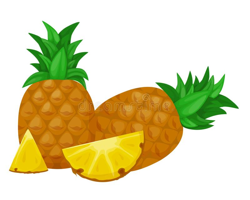 Pineapple fruit with round sliced slices. Fruits for healthy lifestyle. Pineapple fruit with round sliced slices. Summer fruits for a healthy lifestyle. Concept vector illustration