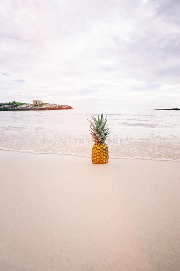 Pineapple Fruit on Seashore during Daytime royalty free stock images