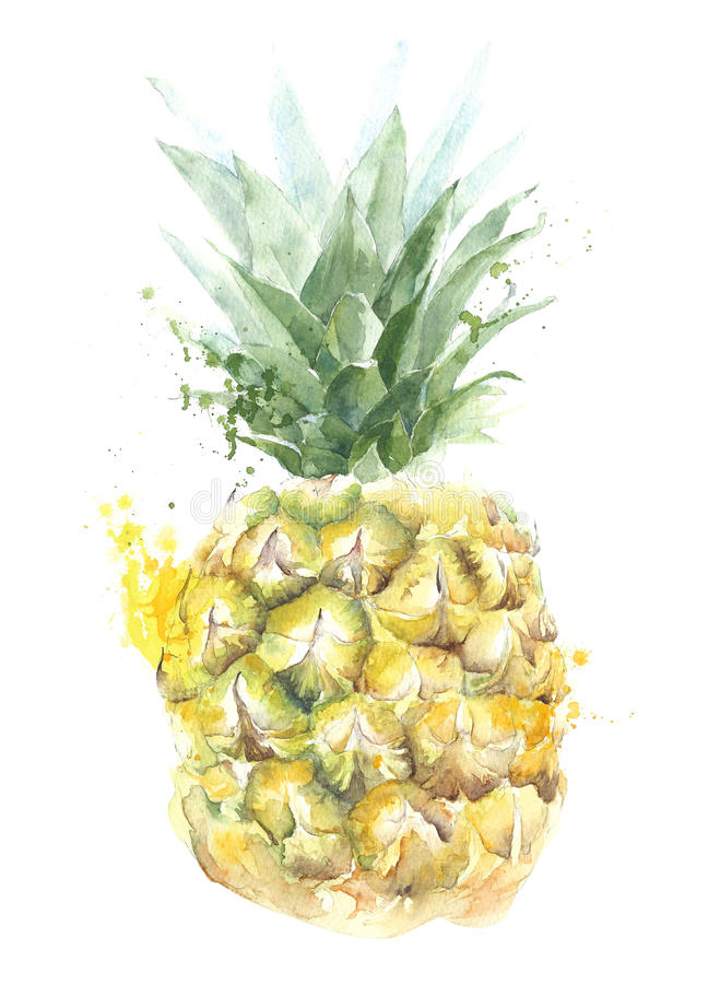 Pineapple fruit watercolor painting illustration isolated on white background stock illustration