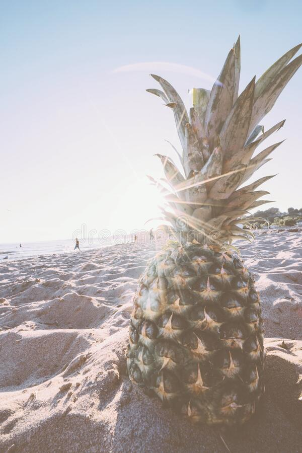 Pineapple in Gray Sand during Daytime royalty free stock photography