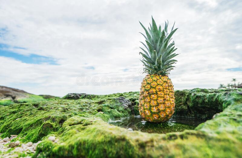 Pineapple in green field royalty free stock photography
