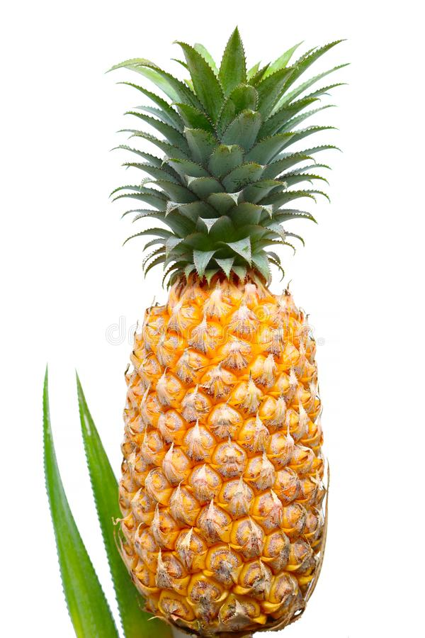 Pineapple on white background royalty free stock photos