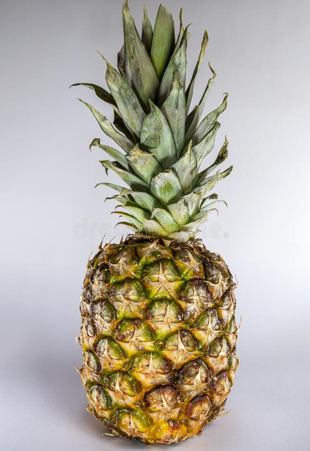 Pineapple in green and yellow against a light background. stock images