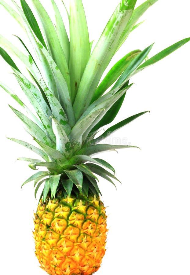 Pineapple isolate