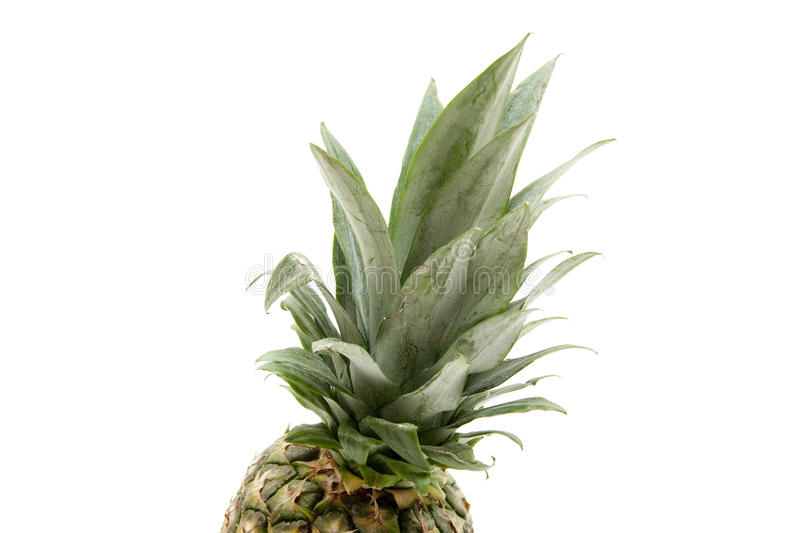 Pineapple with leaves