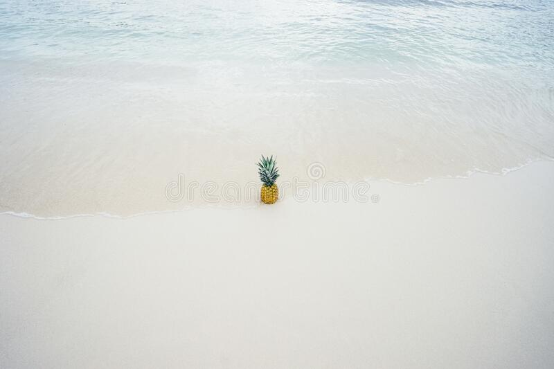 Pineapple in the Middle of the Seashore stock images