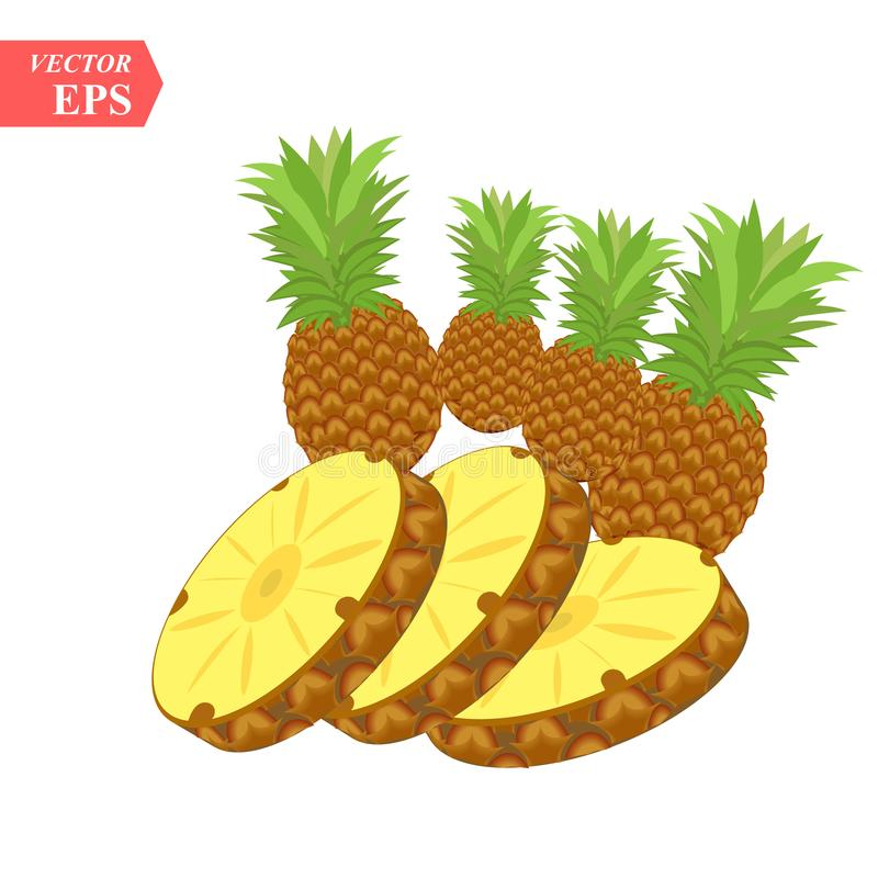 Pineapple realistic fruit with slice. Vector illustration. ananas ripe tropical exotic Juicy fresh food, vitamin healthy dieting. Ananas juice summer vacation royalty free illustration