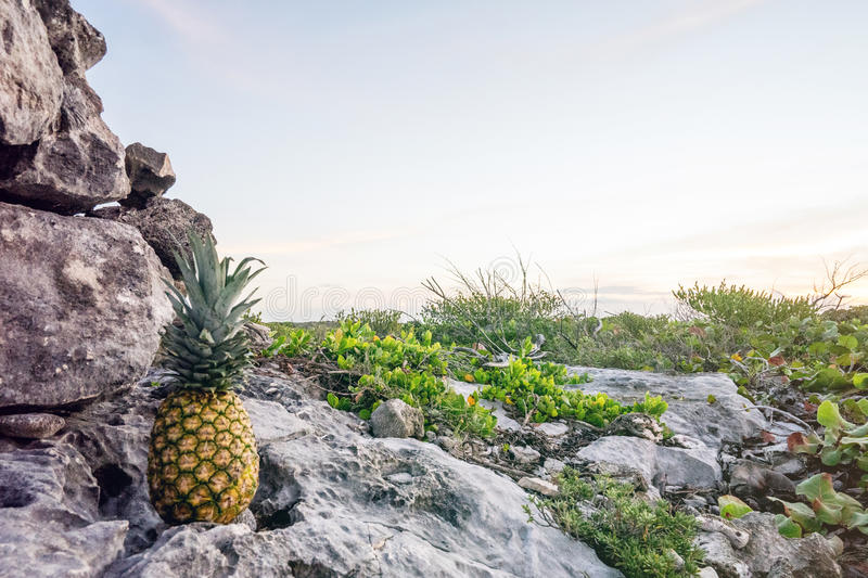 Pineapple On A Rocky Road Rock Free Public Domain Cc0 Image