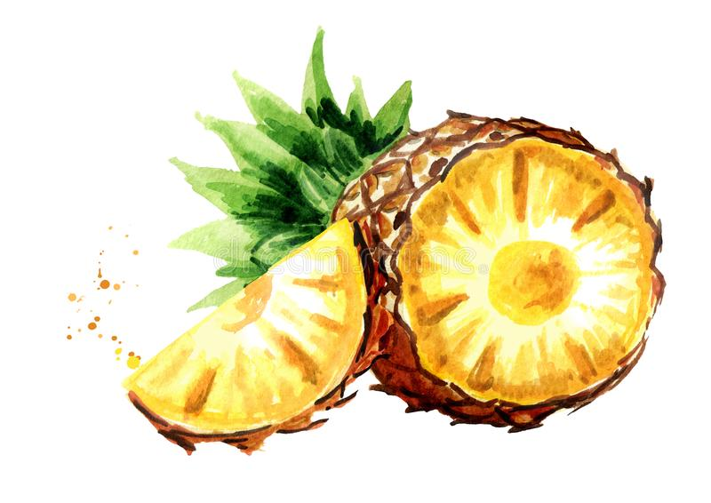 Pineapple with slice. Watercolor hand drawn illustration, isolated on white backgroundÑŽ. Pineapple with slice. Watercolor hand drawn illustration, isolated on stock illustration