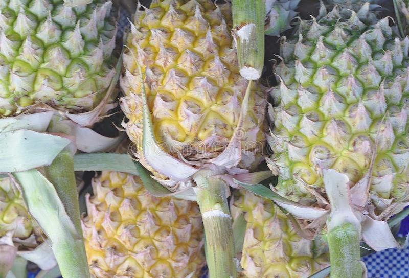 Pineapple stalk.Yellow pineapple green Sold on canvas background.A lot of pineapple fruit background royalty free stock photos