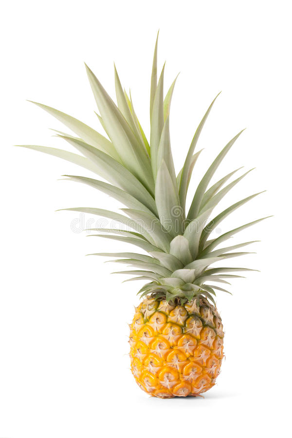 Pineapple tropical fruit or ananas royalty free stock images
