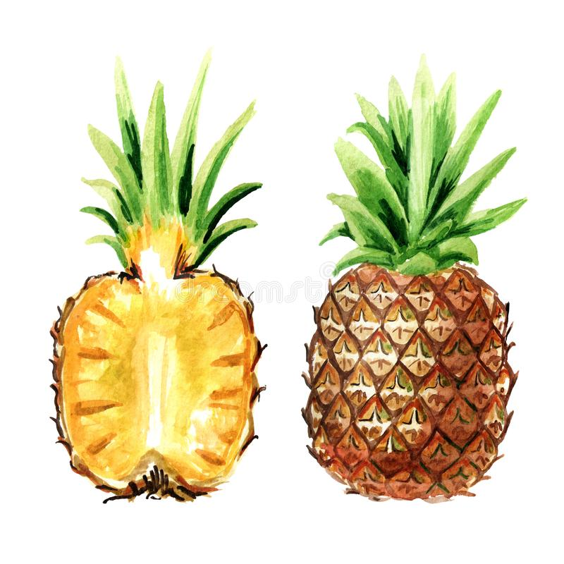 Pineapple whole and cut in half. Watercolor hand drawn illustration, isolated on white background. royalty free illustration