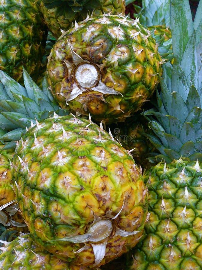 Free Pineapples Stock Image - 5411711