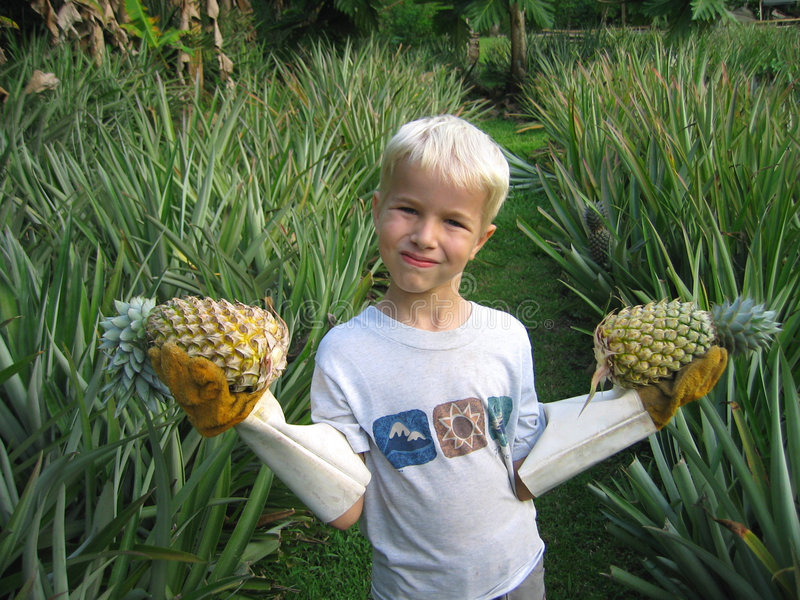 Pineapples anyone? stock images