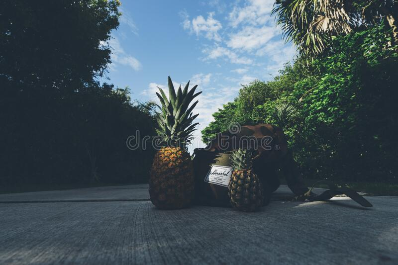 Pineapples Beside Backpack Free Public Domain Cc0 Image