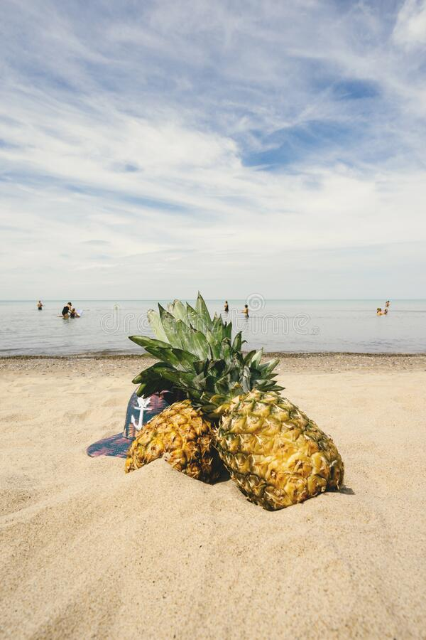 Pineapples on sandy beach royalty free stock images