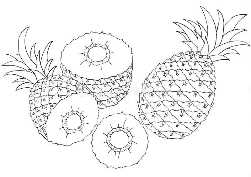 Pineapples sketch