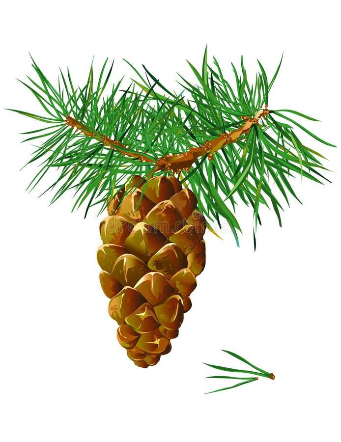 pinecone royalty ilustracja