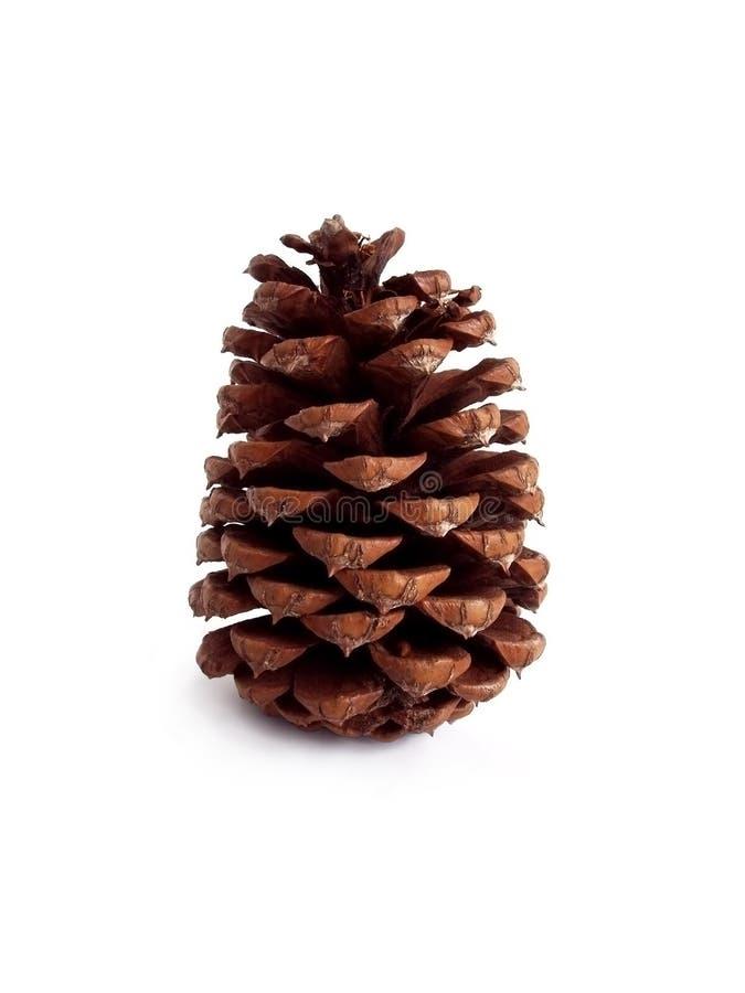 Download Pinecone imagen de archivo. Imagen de pino, árbol, navidad - 184901