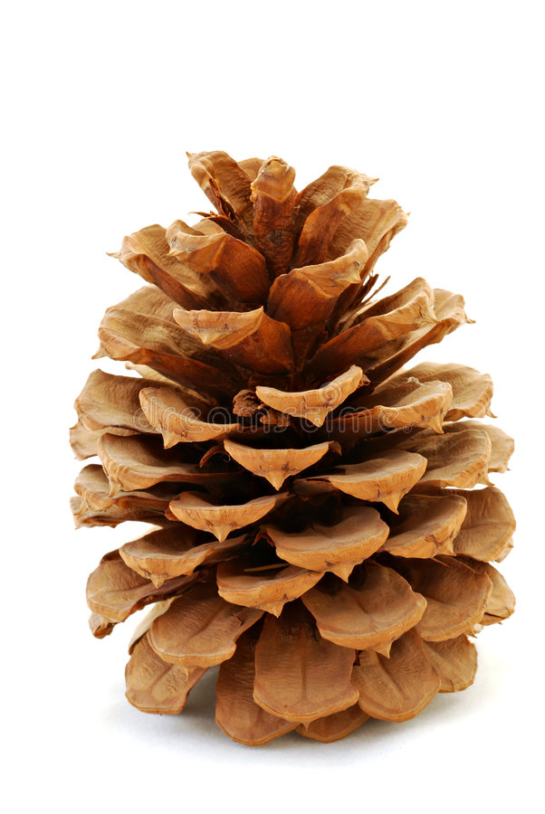 Pinecone images stock