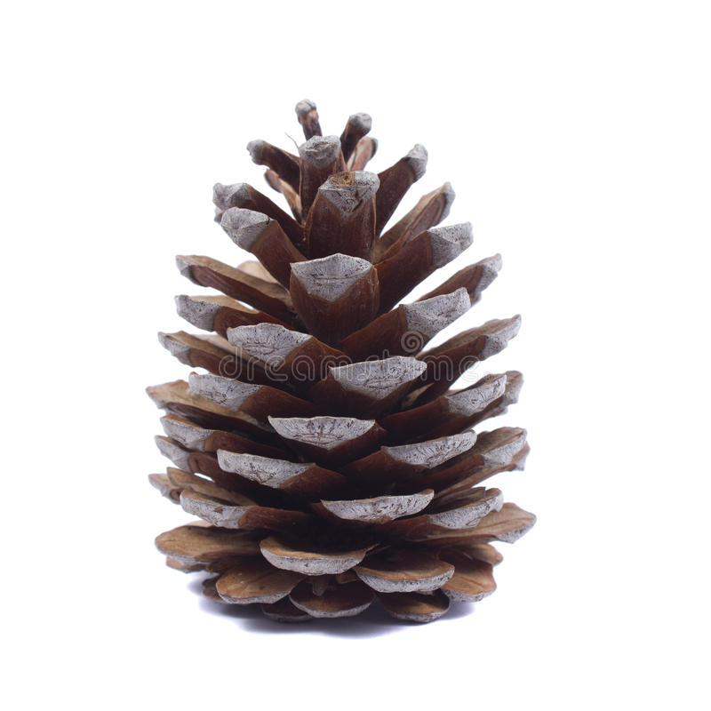Pinecone stockbild