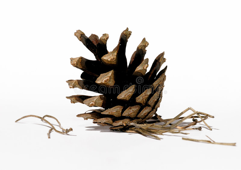 Download Pinecone arkivfoto. Bild av objekt, isolerat, closeup, makro - 32624