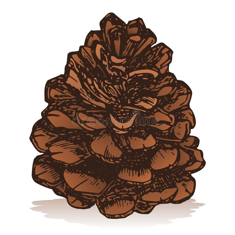 Download Pinecone Royalty Free Stock Photography - Image: 6622427