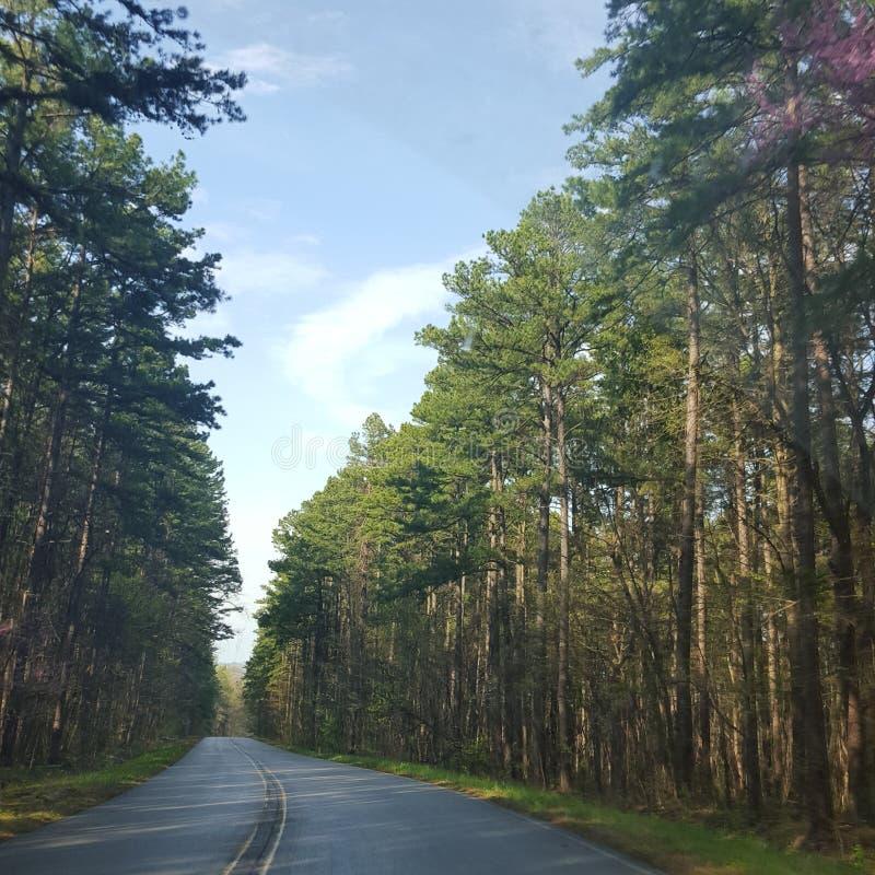 Pinecone adventure. Falls greentree puperl stock image