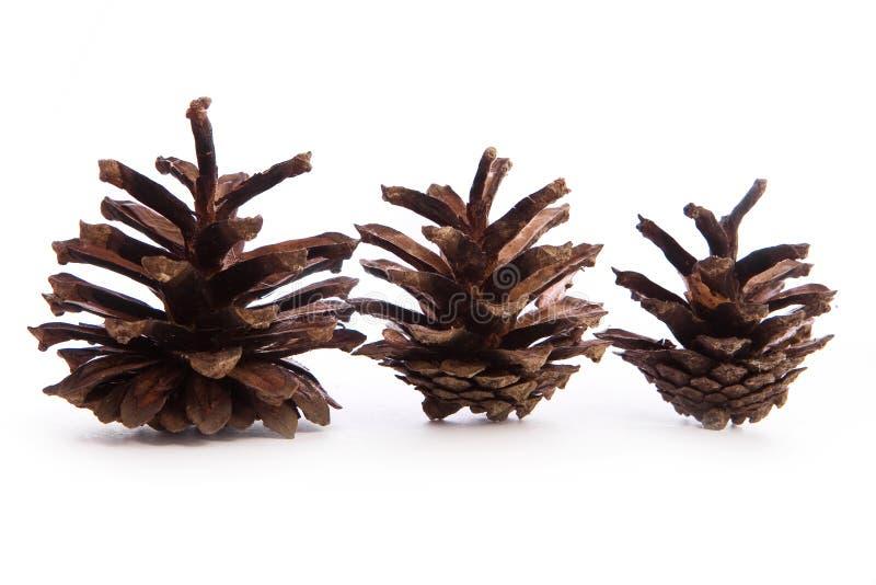 Pinecone auf weißem Hintergrund lizenzfreies stockbild