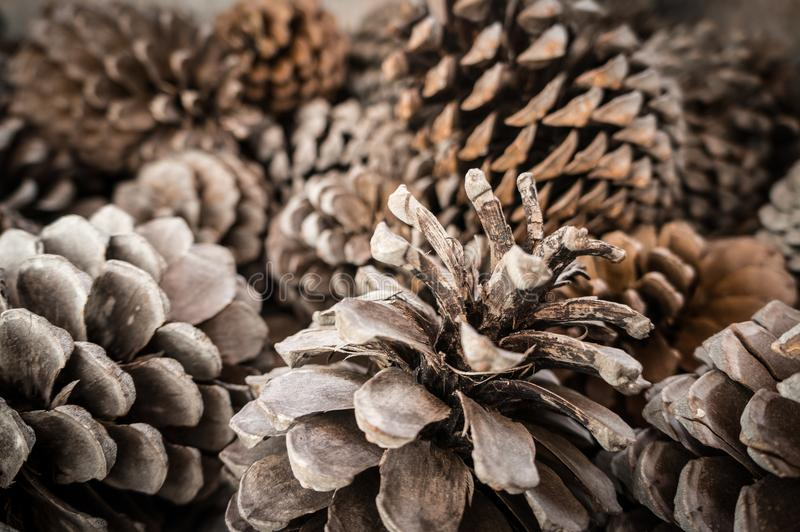 Pinecone backgroud,从Castellon 图库摄影